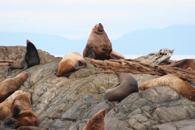 Sea Lion Cruise